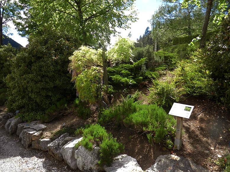 Sentier botanique de Châtillon-en-diois